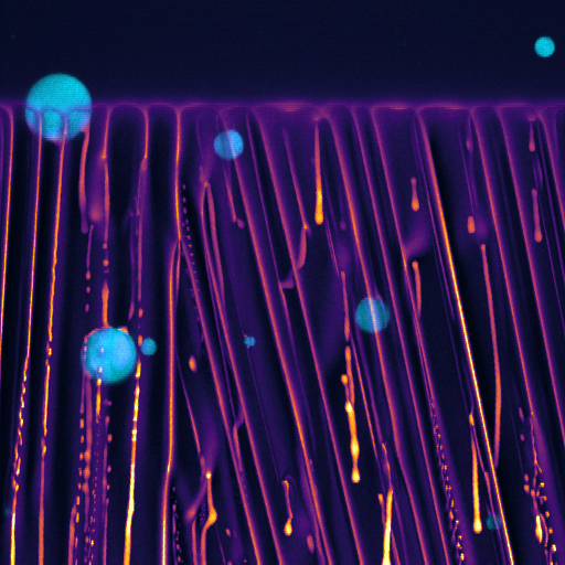 Freezing emulsion, confocal microscopy